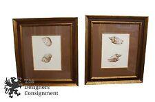 2 Wonderful John Richard Biological Engravings Shells Voluta Pacifica Achatina