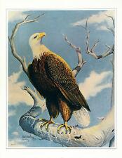 BILL WESLING Rare c1970 S&N Ltd Ed 215/500 Halftone Litho AMERICAN BALD EAGLE