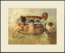 PUG LITTLE DOGS AND FISH IN A BARREL LOVELY DOG PRINT MOUNTED READY TO FRAME