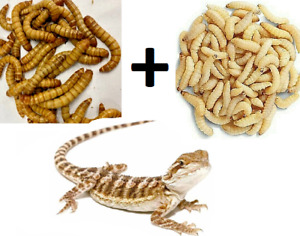 100 Wax Worms & 100 Giant Mealworms Pet Bearded Dragon Live Insect Bug Feeders
