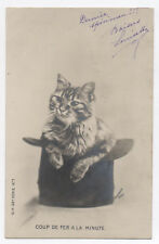 PHOTO ANCIENNE Chat Cat Vers 1910 Carte Coup de fer à la minute A. Courrier