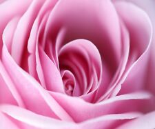 SUPERB ABSTRACT PINK ROSE FLOWER #712 QUALITY CANVAS PICTURE WALL ART A1