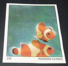 N°236  POISSON CLOWN  PANINI 1970 TOUS LES ANIMAUX EDITIONS DE LA TOUR