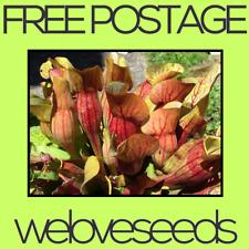 LOCAL AUSSIE STOCK - Pitcher Plant, Sarracenia Purpurea Seeds ~25x FREE SHIP