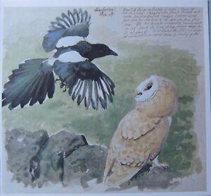 BEAUTIFUL VINTAGE BIRD PRINT ~ MAGPIE & BARN OWL ~ TUNNICLIFFE