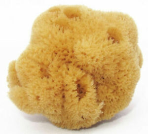 Premium Uncut Formed Greek Silk Firm Sea Sponge Organic Brown 4'' - 4.5''