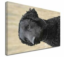More details for curly coat retriever dog x-large 30