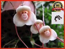 200pcs Strange Rare Monkey Face Flower Plant Seeds Four Seasons Planting Seed