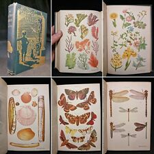 1905 OUTDOOR WORLD Young HANDBOOK Illustrated COLOUR PLATES Natural History