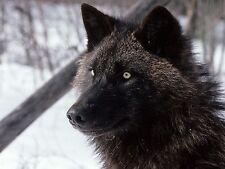 Las imágenes JPEG HD DVD foto genérica 5 Dvds 100000 de #16 a #20 frío del Ártico nieve Lobos
