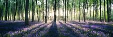 ENCHANTED FOREST SUNRISE DOOR POSTER (53x158cm)  NEW WALL ART