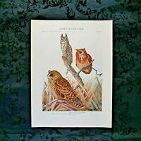 Antique 1915 Louis Agassiz Fuertes Print Plate# 56 Screech Owl..................