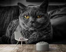 3D British Shorthair A11676 Animal Wallpaper Mural Self-adhesive Removable Amy