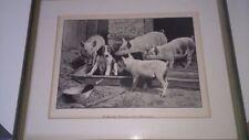 Deko-Bilder mit Tier-Motiv aus der Rubrik Malerei & Zeichnung