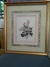Framed Botanical Print of Epidium Macranthum and other varieties