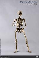 COOMODEL 1/6 Human Skeleton Body Skull Model Flexible 12'' Action Figure Body