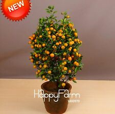 100 pcs Balcony Patio Potted Fruit Trees Planted Seeds Kumquat Seeds Orange Seed