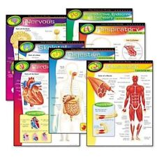 Trend The Human Body Learning Chart (TEP38913)