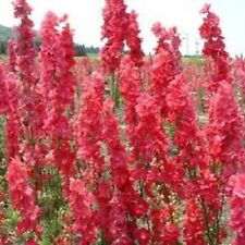 50 Red Delphinium Seeds Perennial Garden Flower Bloom Seed Flowers 122 Us Seller