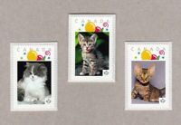 KITTENS = Domestic CATS = Set of 3 Picture Postage MNH Canada 2016 [p16/02-2kt3]