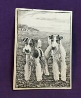 *Advertising Tobacco Dog Card ARDATH & STATE EXPRESS CIGARETTES Fox Terrier