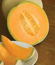 "Hales Best Jumbo Cantaloupe *Heirloom*  (50 Seed's) ""FREE SHIPPING""<Non-GMO>"