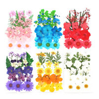1 Bag Of Dried Flowers UV Resin Decorative Natural Flower Stickers 3D Dry Dec YK
