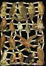German Victorian Style Embossed Scrap Die Cut- Birds of Prey / Hawk / Owl EF7333