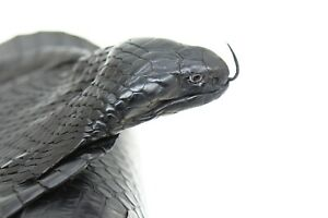 Head-on Authentic Monocled Cobra Taxidermy Hide w/ Black Eyes Mouth Closure