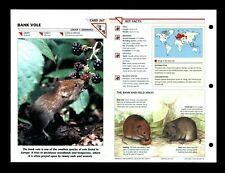Bank Vole Wildlife Fact File Mammal Animal Card Home School Study 1.267