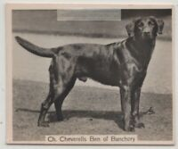Black Labrador Retriever 1930s Champion  Dog Breed Canine Pet Ad Trade Card