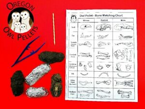 5 Large Owl Pellet Pack (2+ inches)