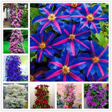 100 Pcs Clematis Seeds Beautiful Flowers Plants Garden Mixed Perennial Bonsai