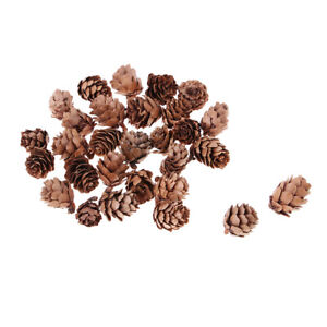 30x Small Natural Dried Pine Cones In Bulk Dried Flowers for