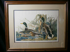 MALLARD DUCK AUDUBON PRINT ART FRAMED ANAS BOSCHAS STUNNING COLORS