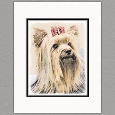 Yorkshire Terrier Yorkie Original Print 8x10 Matted to 11x14
