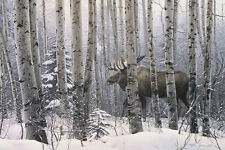 CANVAS ART - A Walk In The Woods by Stephen Lyman Moose Wildlife Forest 24x34