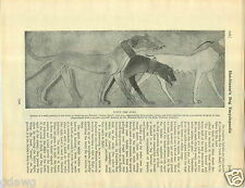 1930 Book Plate Dog Print Saluki Ranelagh Desborough Amherst