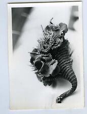 PHOTO noir & blanc curiosa botanique plante scène de genre botaniste