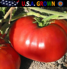 100 Delicious Tomato Seeds - World Record 7lb Tomatoes Heirloom Gardening