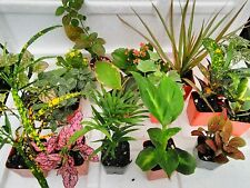 Fairy Garden Live 8 Plants Terrarium in 2.5 Is Approximately 4 to 6 Inch Height