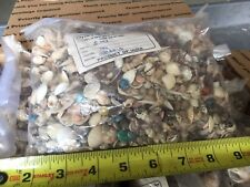 18 lbs. Small Sea Shells - LARGE VARIETY - CRAFTING