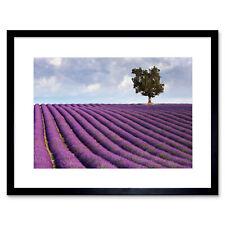 Photo Lavender Field Lone Tree Purple Landscape Framed Print 12x16 Inch