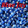 "Marbles 45 Blue Jay PeeWee Marbles By Mega  Vacor ☆ 1/2"" ☆ FREE DOMESTIC SHIP.."