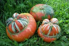 5g  Semillas Giraumon Turban (Cururbita máxima Duchesne)  (15 Semillas aprox) (S