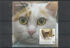 St Vincent & The Grenadines 2013 MNH Cat Breeds II 1v S/S Pets Shorthair Stamps