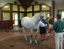 "SILVER CHARM AT THREE CHIMNEYS HORSE RACE PHOTO 8"" by 10"""