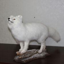 ARCTIC FOX - TAXIDERMY MOUNT, STUFFED ANIMAL FOR SALE - POLAR FOX, SNOW FOX
