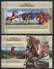 Guinea 2013 - Pferde Wildpferde Horses Chevaux Caballos Cavalli Paarden Cavalos