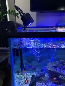 Used (1) Kessil A350 Controllable LED Aquarium Light - Tuna Blue With Clamp